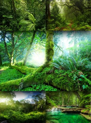 Jungle and tropical forests (the images)