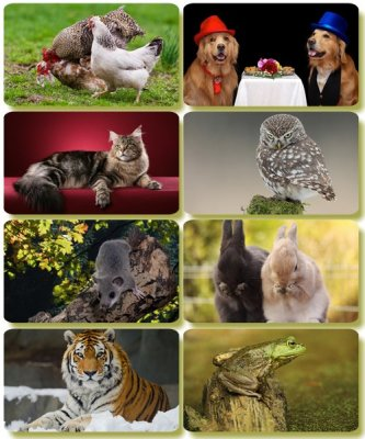 Funny Animals - Collection photo wallpapers (part 68)