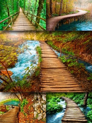Beautiful bridges (the images)