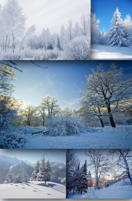 Winter forest photo - landscapes